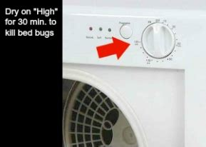 do bed bugs die in the washer do bed bugs die in the washer how to kill bed bugs wash
