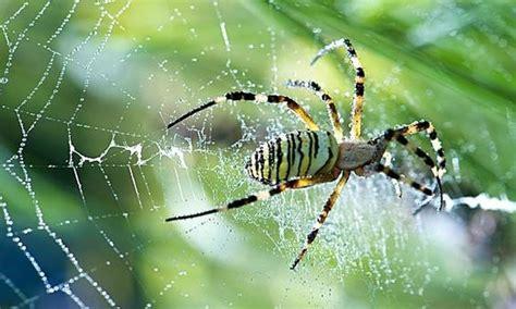 Garden Spider Benefits The World S Catalog Of Ideas