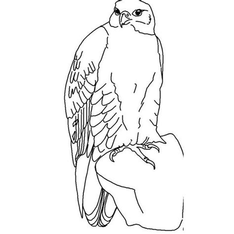 coloring page falcon bird parrot coloring pages for preschoolers bird coloring