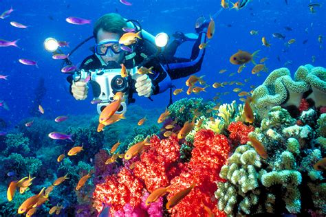 dive fiji fiji diving