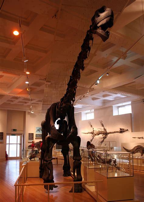 cetiosaurus wikipedia
