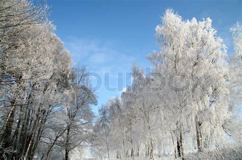 winter stock photo colourbox quot winter quot stock photo colourbox