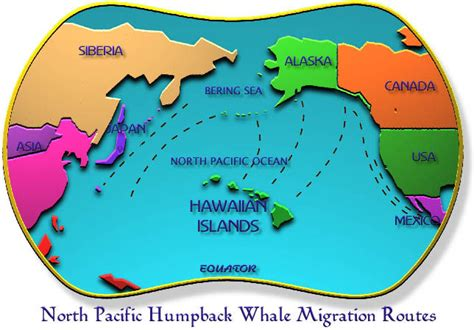 migration pattern of blue whale image gallery humpback whale migration patterns