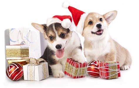 cheap puppy supplies cheap supplies where to find best discounts