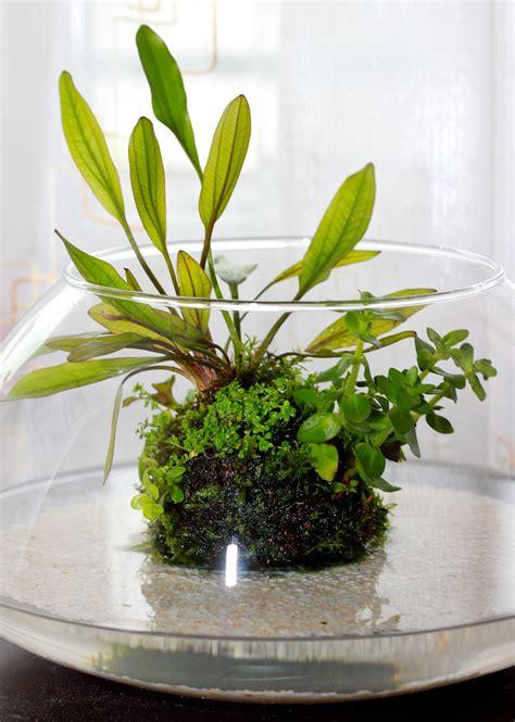 indoor water indoor water garden e bgt indoor water gardens