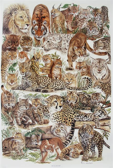 Prints Spotted In World by Cat Posters Cat Charts Cat Family