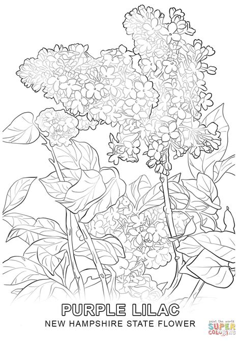 coloring page of new jersey state flower coloring page of new jersey state flower coloring pages