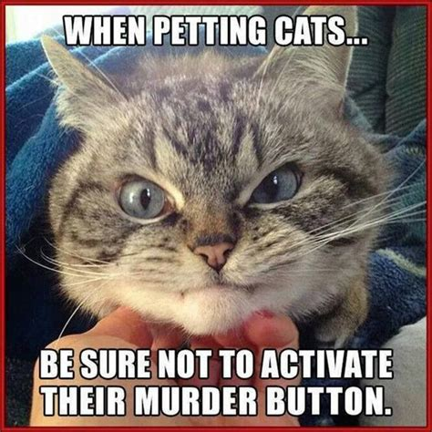 Pet Memes - funny animal pictures of the day 21 pics check out