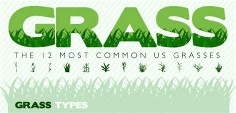 types of turfgrass hatch urbanskript co