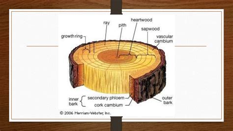 tree cross section table chapter 7 timber