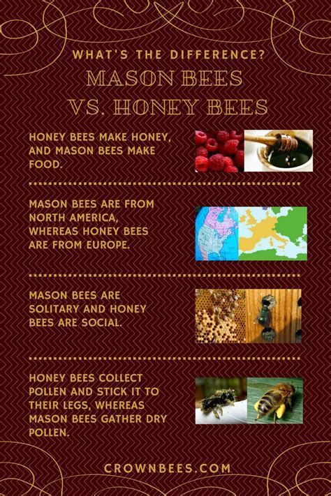 71 best images about Bee Learning on Pinterest