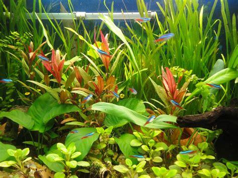 Mon Aquarium 54l Communautaire Forum D Aquariophilie Presentation De Mon Aqua 250l