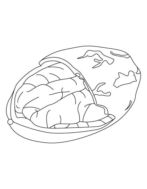 kukui candlenut tree coloring page coloring pages