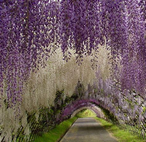 kawachi fuji gardens 1 world knowledge kawachi fuji garden japan