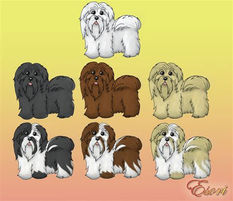 havanese colors havanese coat colors by ladyesori on deviantart