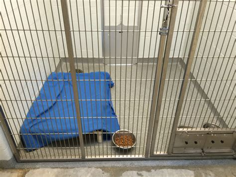 animal shelter facility durex seamless floor wall