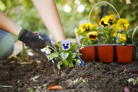 Spruce Up Your Garden For Summer Palmers Garden Centre Gardening Plants And Flowers
