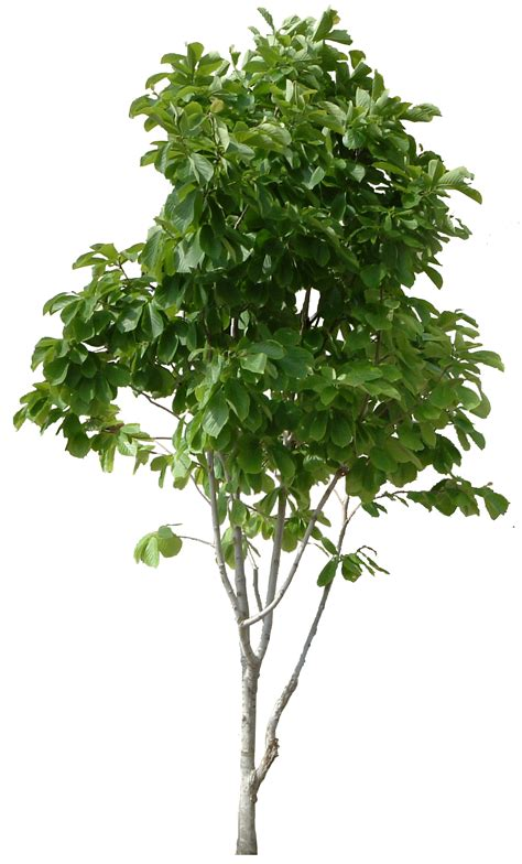 green leaves png image veerendra vijaya pinterest hd tree png cool tree images free download picturespider