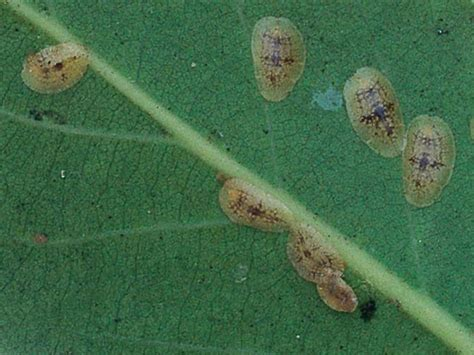 identify garden pests how to identify and remove common garden pests garden