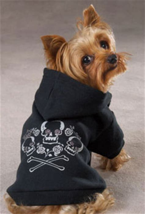 yorkie clothes yorkie clothes and fashion all about clothes and fashion for yorkies breeds picture