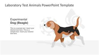 animals powerpoint template beagle breed animal testing slidemodel