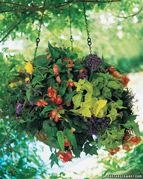 no sun plants 100 no sun plants 12 best annual flowers for full