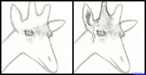how to your step by step how to draw a giraffe step by step safari animals animals free drawing