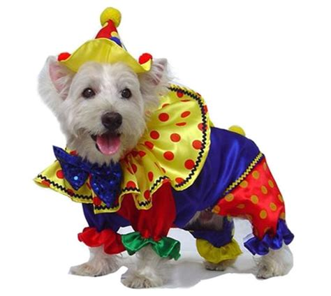 clown costume for dogs clown costumes for dogs clown costumes clown costumes