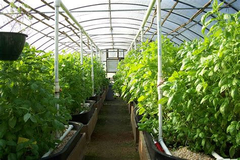 green house building buying a greenhouse