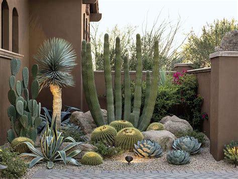 desert lush succulent garden landscape cactus garden