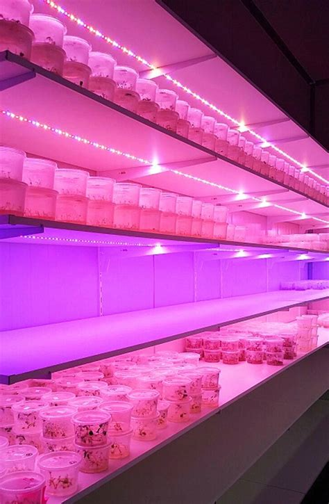 lada led grow lada led indoor 28 images lade indoor 28 images lade