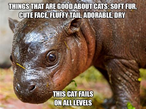 totally  worst cat   pics