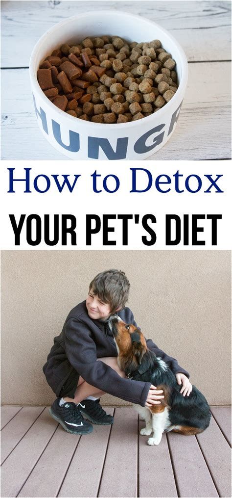 Dogs Detox Diet by How To Detox Your Pet S Diet