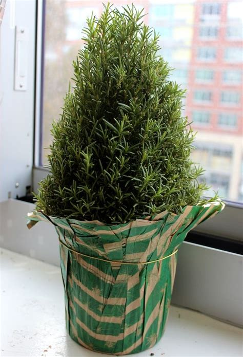 17 best images about christmas plant basket on pinterest