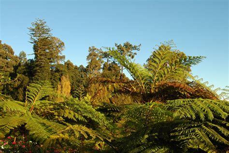 jardin tropical le jardin tropical du monte palace 224 mad 232 re