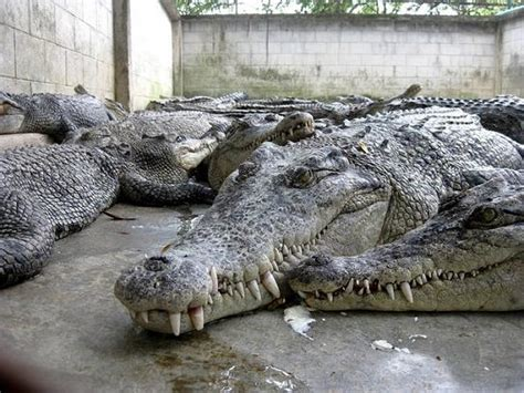 Pattaya Crocodile Farm and Million Years Stone Park