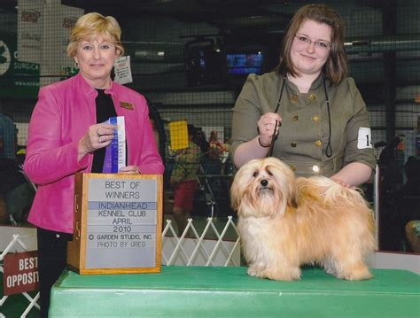 happy paws havanese happy paws havanese minnesota akc show breeder