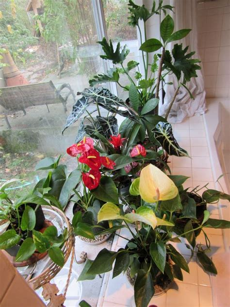 north window plants 76 best images about extraordinary house plants on
