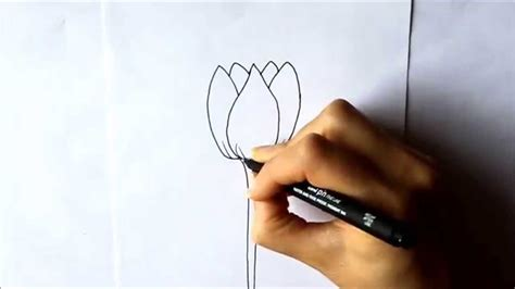 imágenes de rosas bonitas para dibujar c 243 mo dibujar un tulip 225 n c 243 mo dibujar flores dibuja conmigo