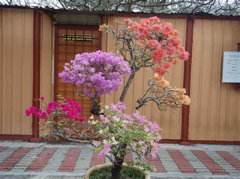 Kertas Warna Warni Li Na Herbs Pokok Bunga Kertas Berwarna Warni