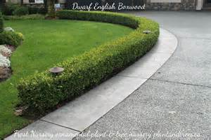 Types Of Garden Edging - boxwood shrubs what s growing on
