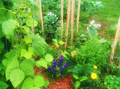 Companion Gardening by Companion Planting Outdoor Garden Space
