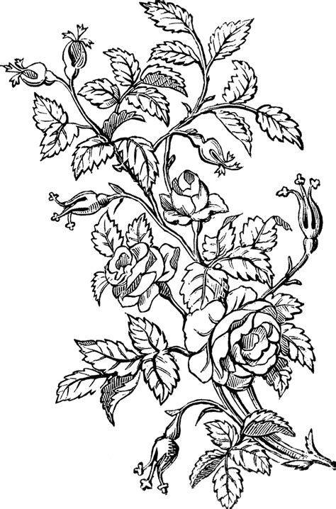 lovely ornamental roses design the graphics fairy