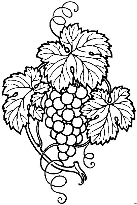 a breath of fresh flowers coloring book books