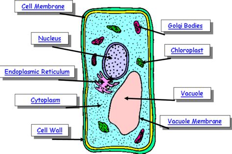 plant cell diagram labeled parts of a plant cell