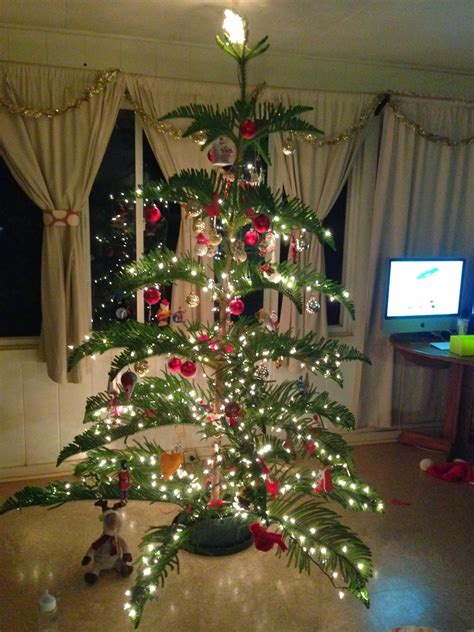 north shore notes hawaiian christmas tree