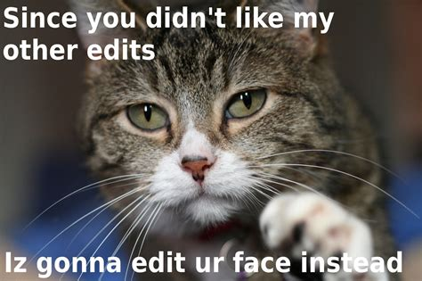 10 Funniest Cat Photos by Cat Jokes Quot Origin Of Name Cats Quot Bothereds Cat Pictures