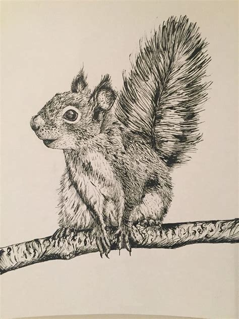 pen and ink tattoo my illustration of a cheeky squirrel in pen