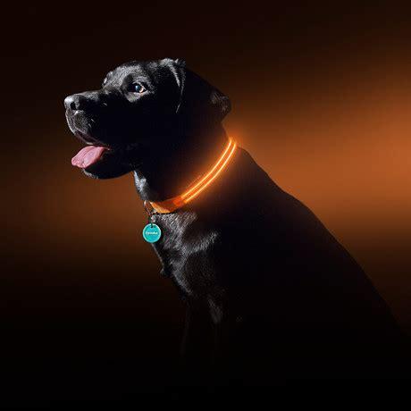 led collars sunset orange led collar medium squeaker touch of modern