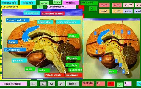 test sistema nervoso sistema nervoso due test su sperimentare
